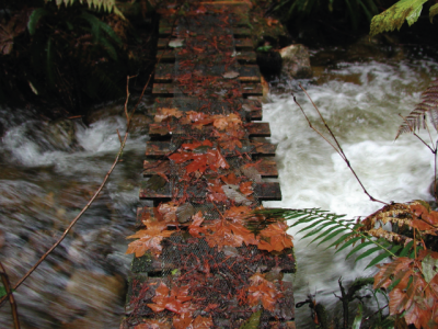 leaves-on-bridge